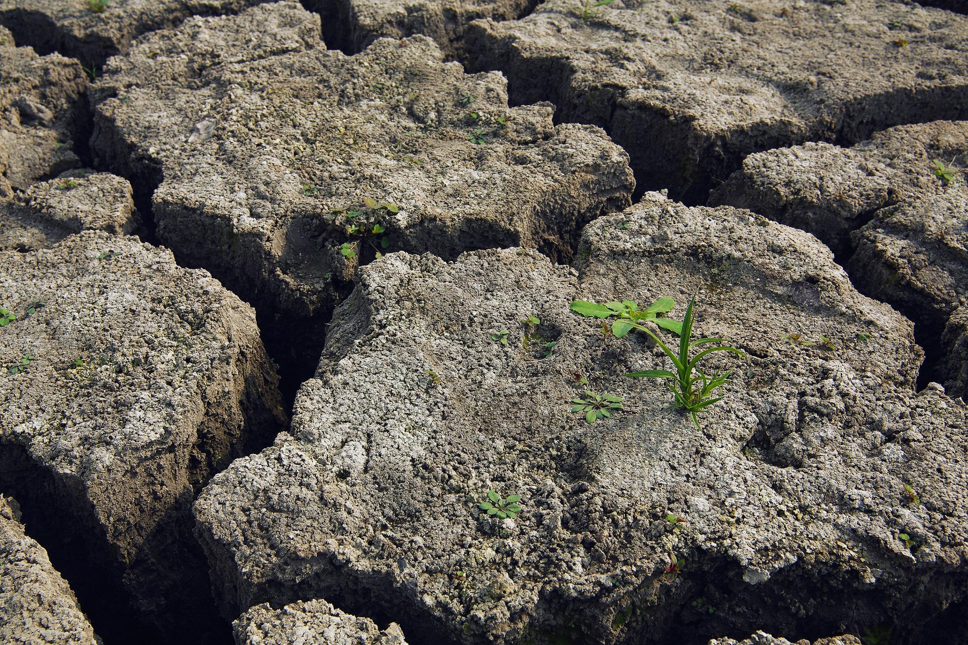 Calentamiento global y cambio climatico en España